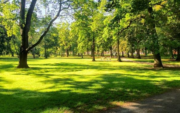 Петербургский парк Малиновка не устоял перед церковью
