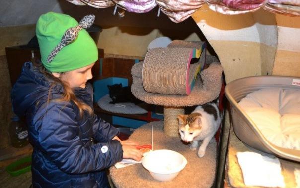 В Петербурге прошел День Эрмитажного кота